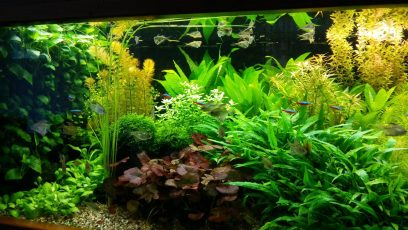 Deze maand Redfield ratio voor een algenvrij aquarium