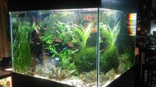 Ons aquarium bij de Oliemeulen