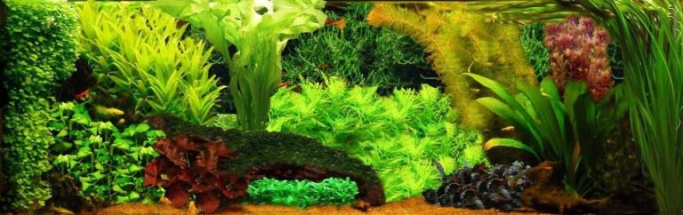 Deze maand Esthetica van het aquarium door Adrie van Holstein